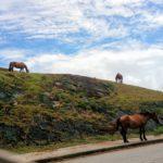 馬が放牧される南牧場