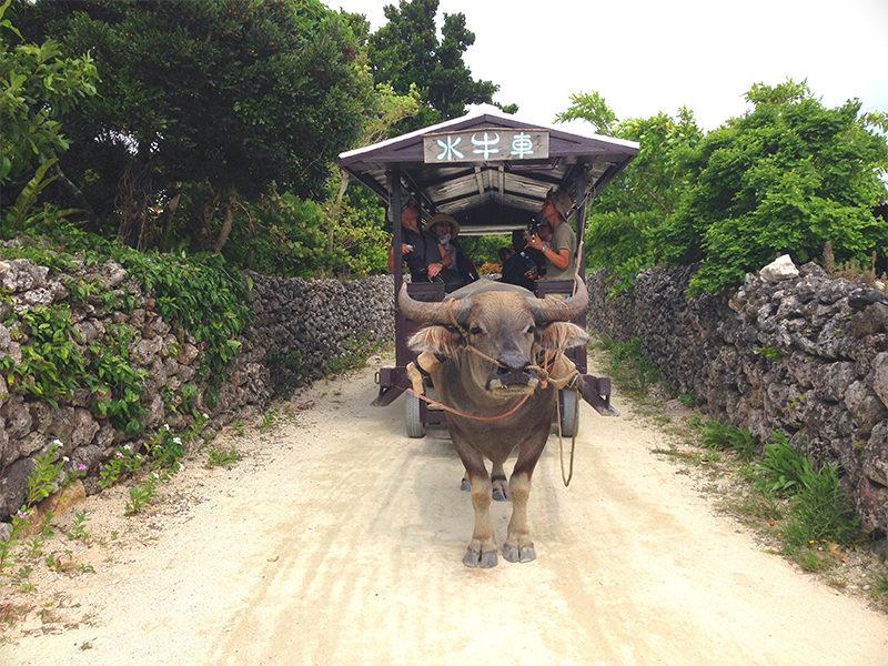 新田観光の水牛者