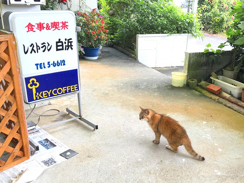 玄関に6匹の猫